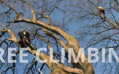 Corsi Tree Climbing: Lombardia e Piemonte